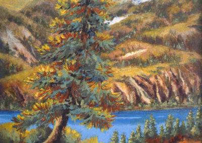 Lone Spruce